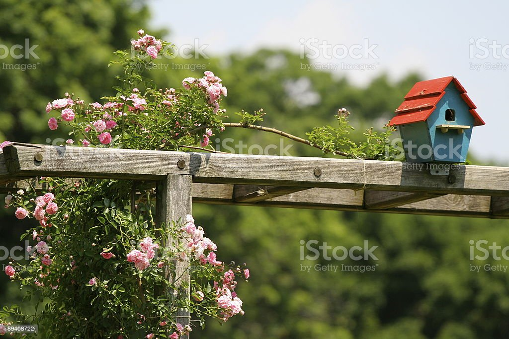 red and blue birdhouse royalty-free stock photo