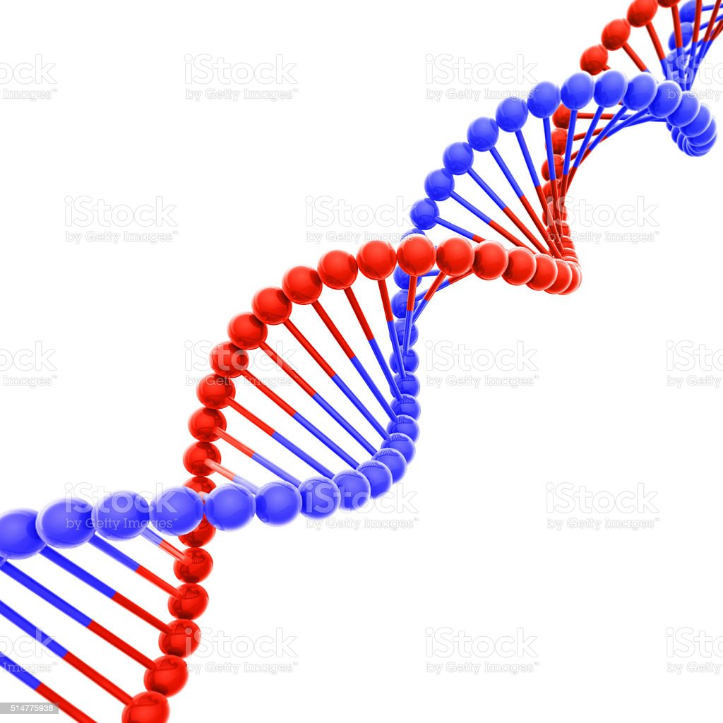 Red and Blue DNA Helix Isolated on White stock photo