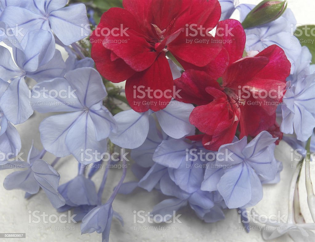 Red and Blue Flowering Plants stock photo