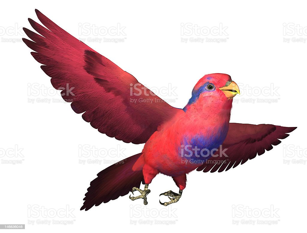 Red and Blue Lory Flying royalty-free stock photo