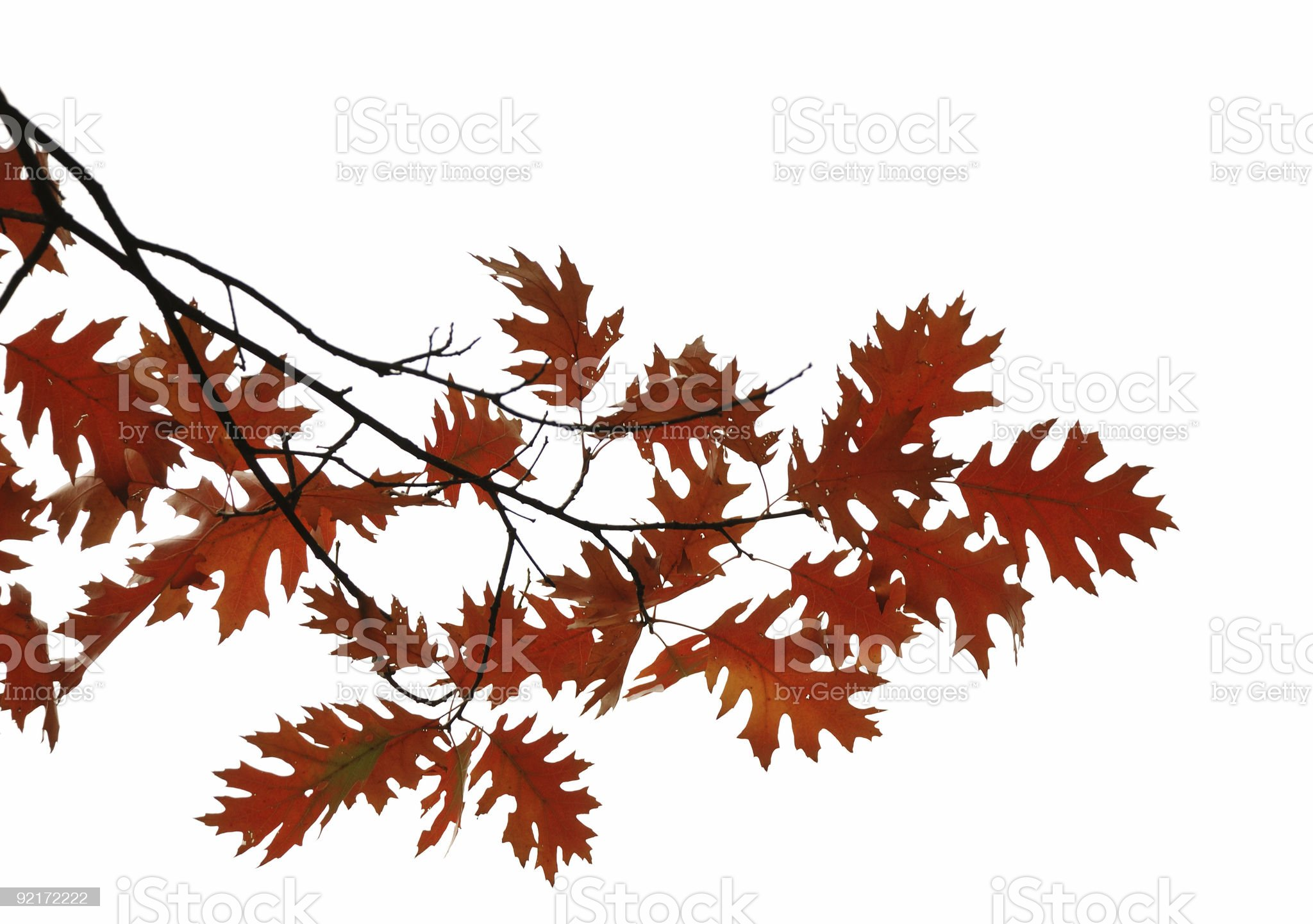 Red and brown leaves background royalty-free stock photo