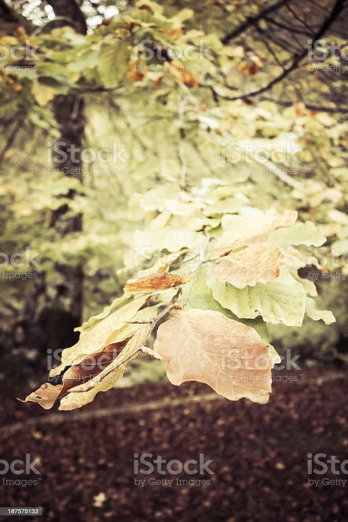 Red and Green Leaves in Autumn stock photo