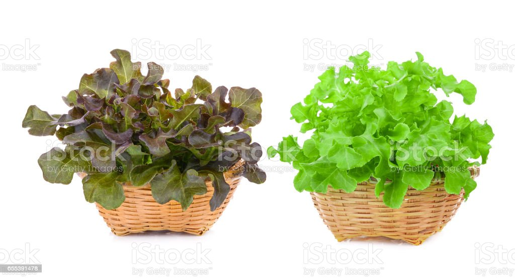 red and green oak lettuce in wood basket isolated on white stock photo