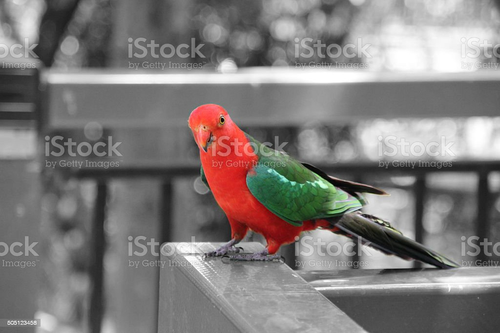 red and green parrot stock photo