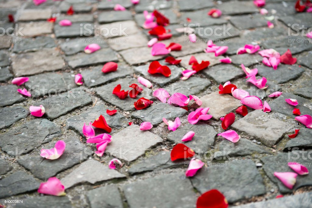red and pink petals lying on the ground stock photo