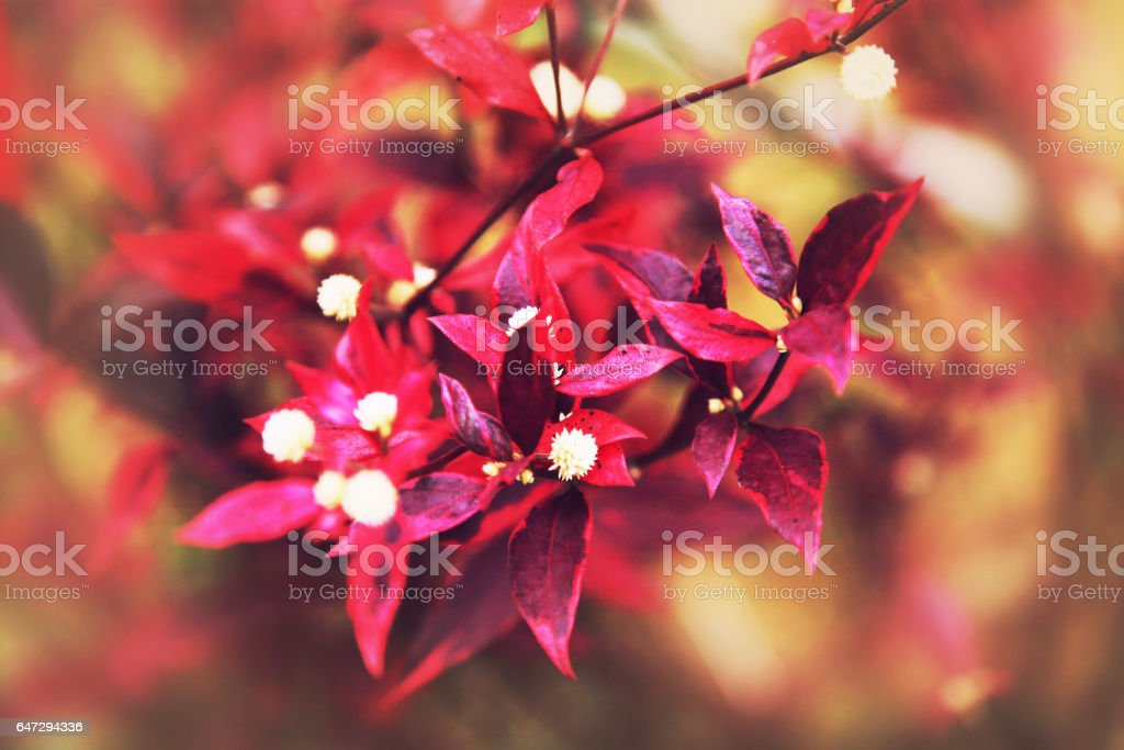 Red and violet flowers stock photo