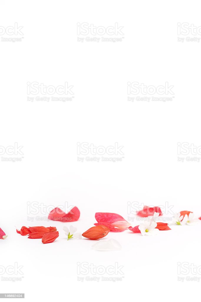 red and white flower petals royalty-free stock photo