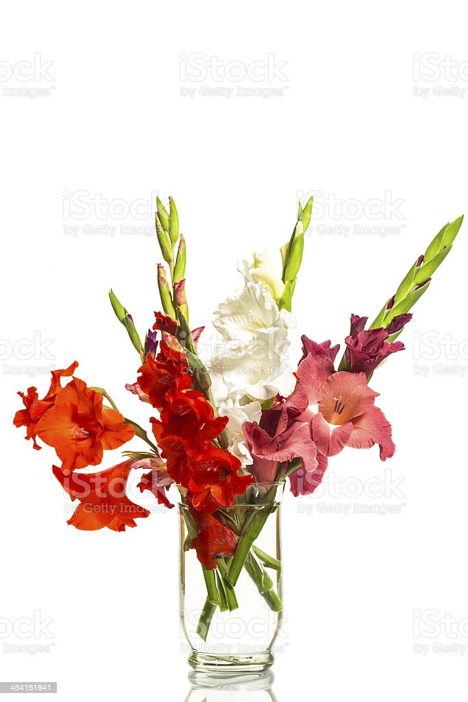 red and white gladioli in a vase royalty-free stock photo