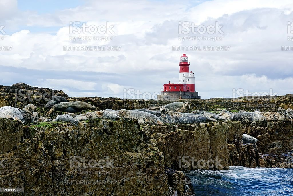 Red And White Lighthouse, Seals On Rocks stock photo