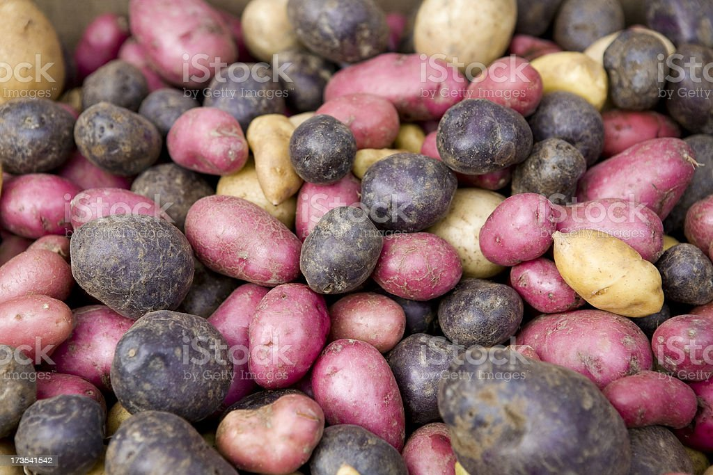 Red and white potatoes stock photo