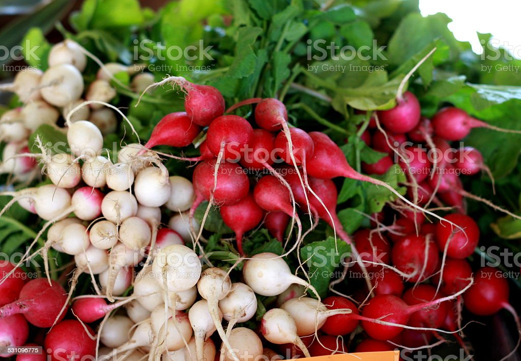 Red and White Radishes stock photo