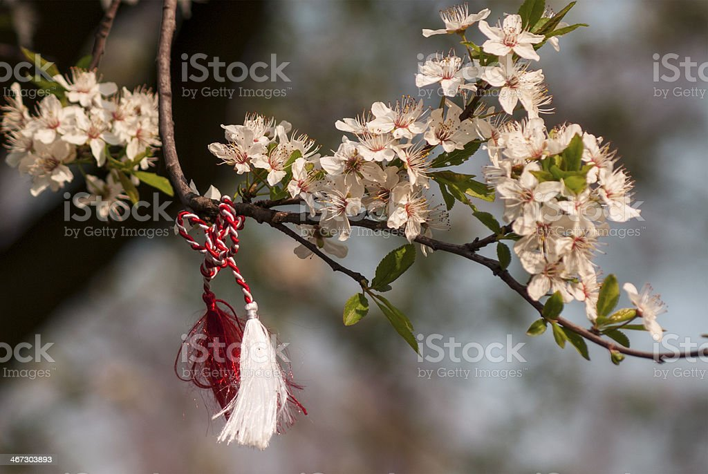 Red and white string on a blossom branch royalty-free stock photo
