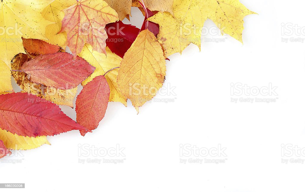red and yellow autumn leaves frame royalty-free stock photo