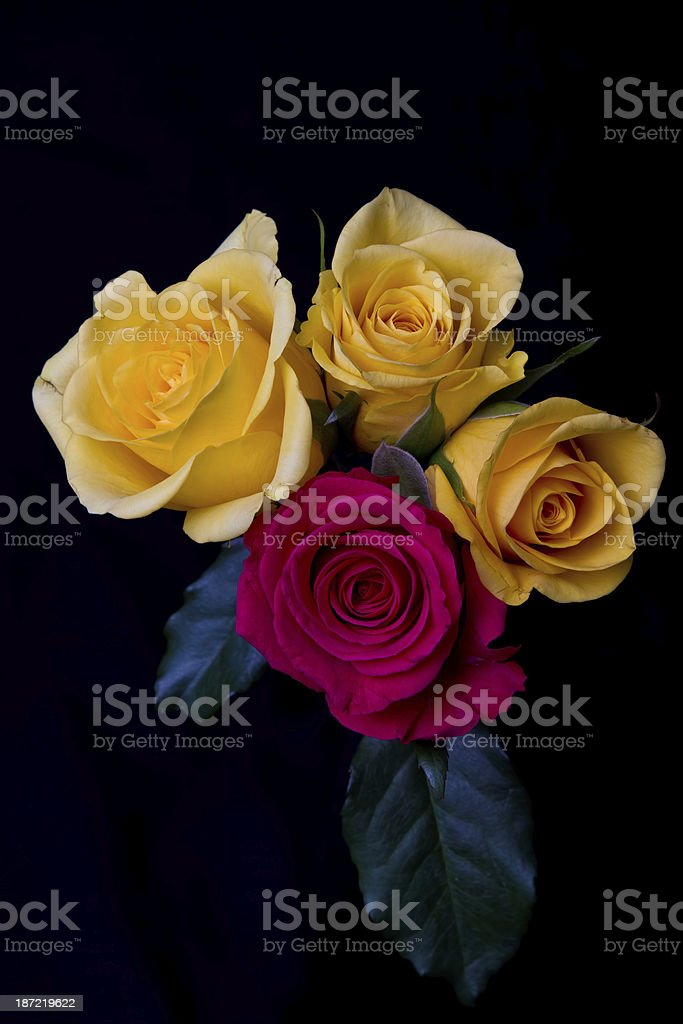 Red and yellow roses royalty-free stock photo