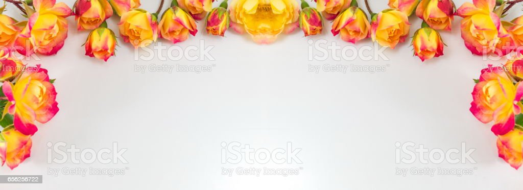Red and yellow roses wide banner stock photo