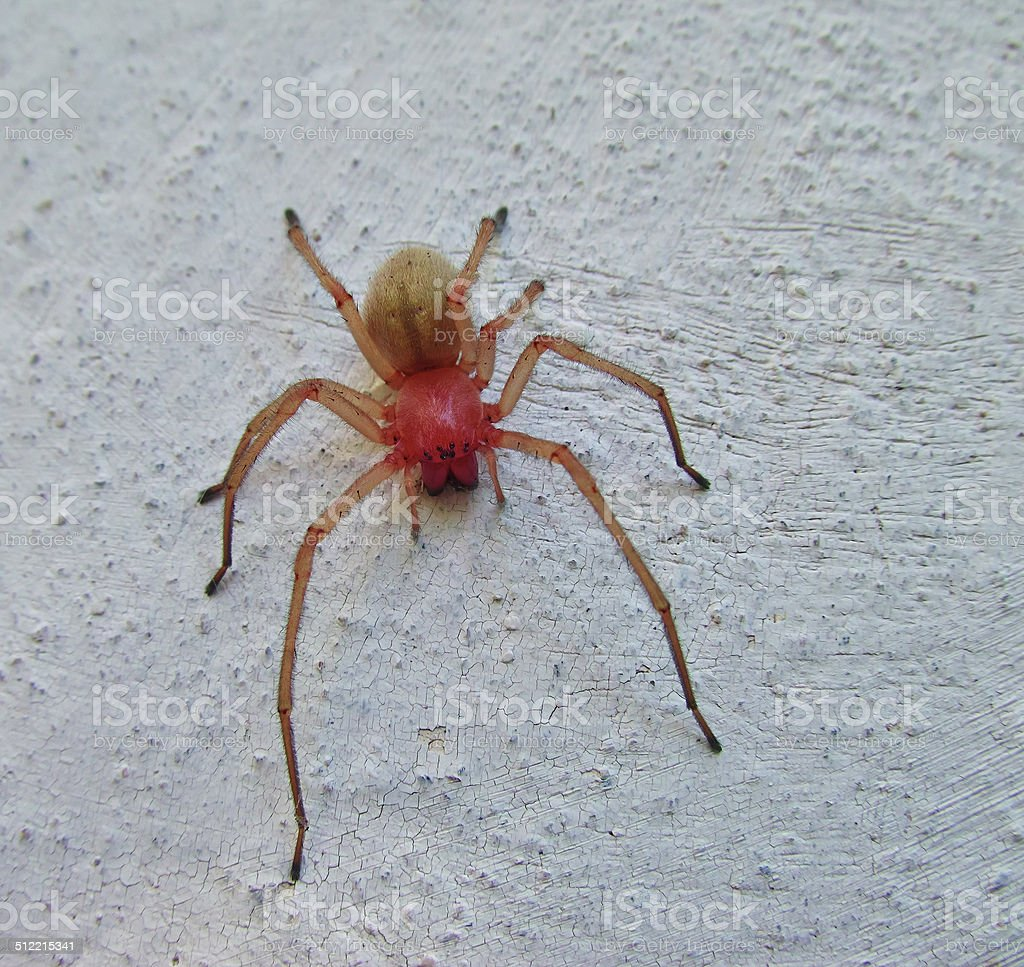 red and yellow spider royalty-free stock photo