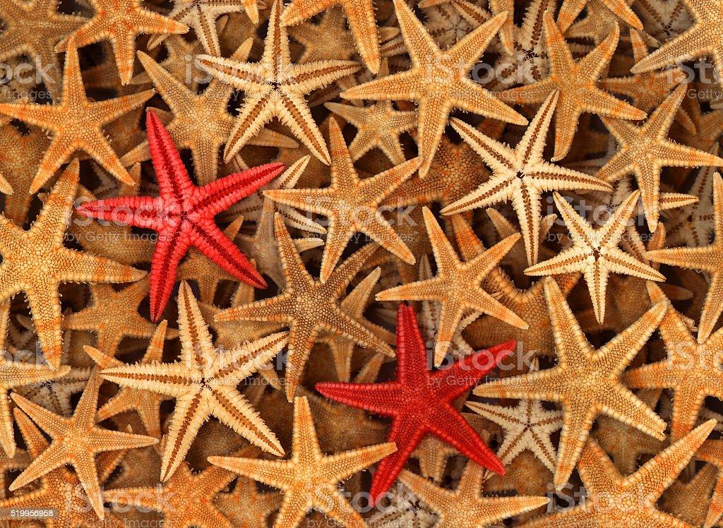 Red and yellow starfish stock photo