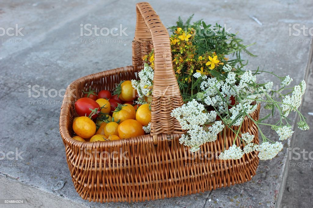 Red and yellow tomatoes in the basket covered with herbs. stock photo