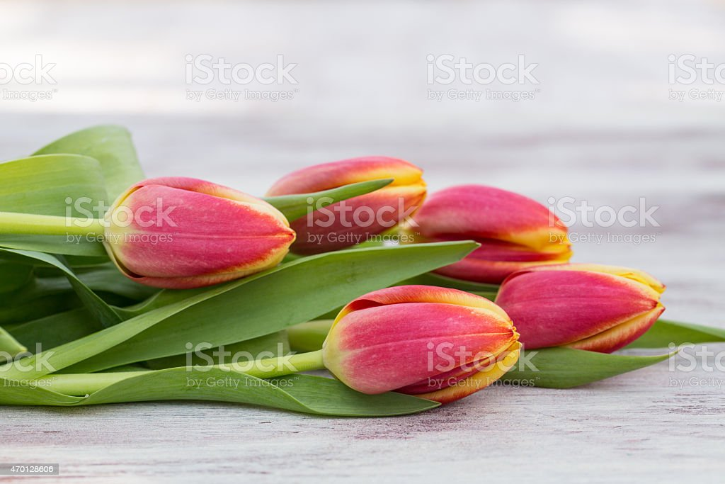Red and Yellow Tulips Lying on Table stock photo
