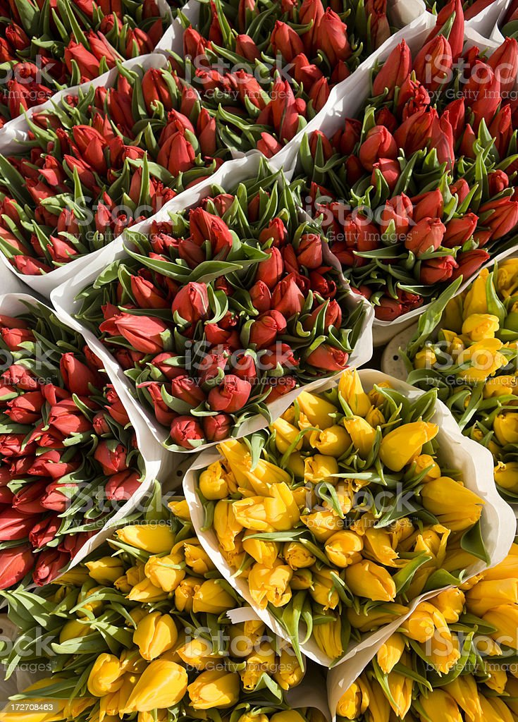 Red and Yellow Tulips royalty-free stock photo