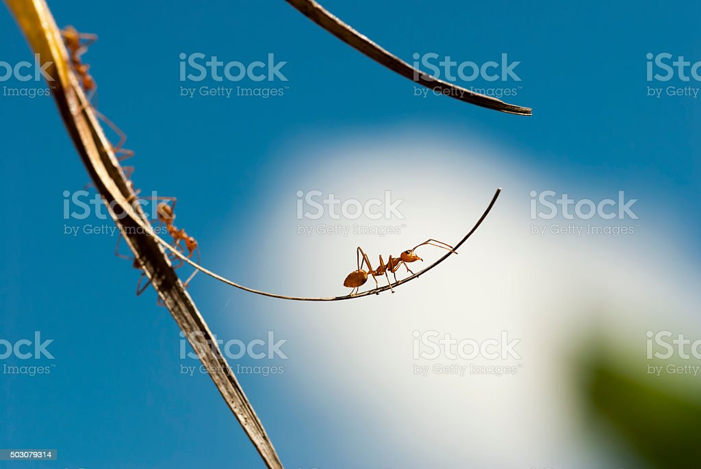 red ant on a branch stock photo