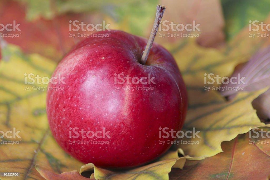 Czerwone Jabłko z liści jesienią zbiór zdjęć royalty-free
