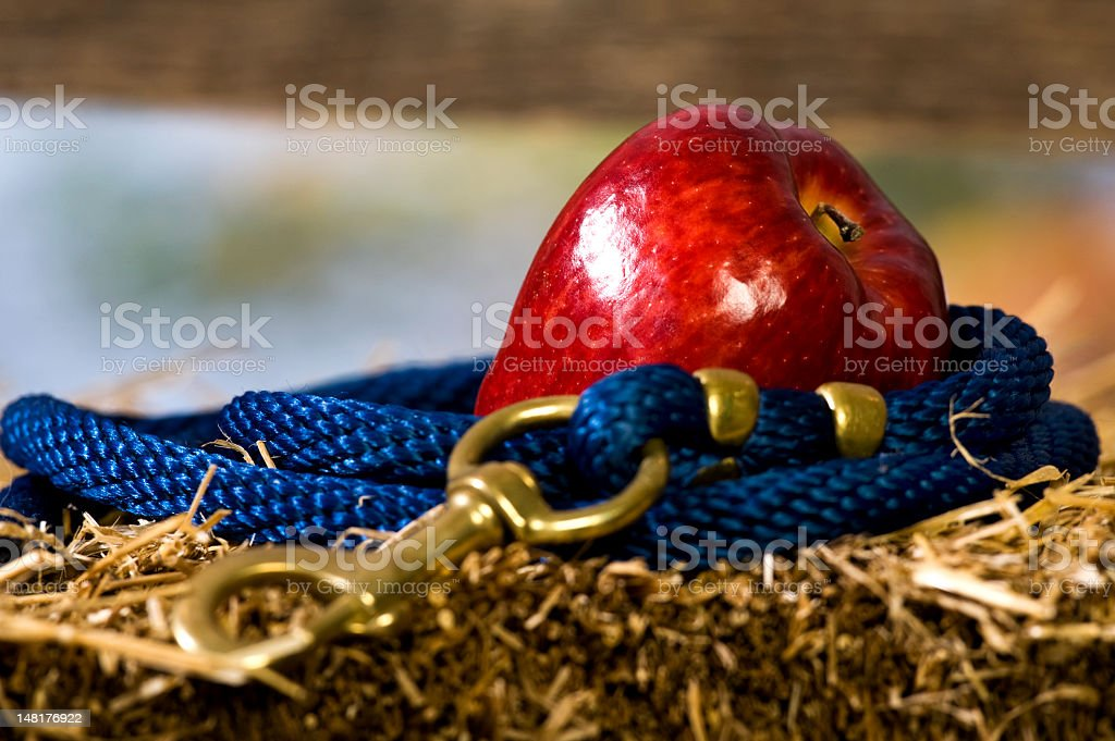 Red Apple with lead rope royalty-free stock photo