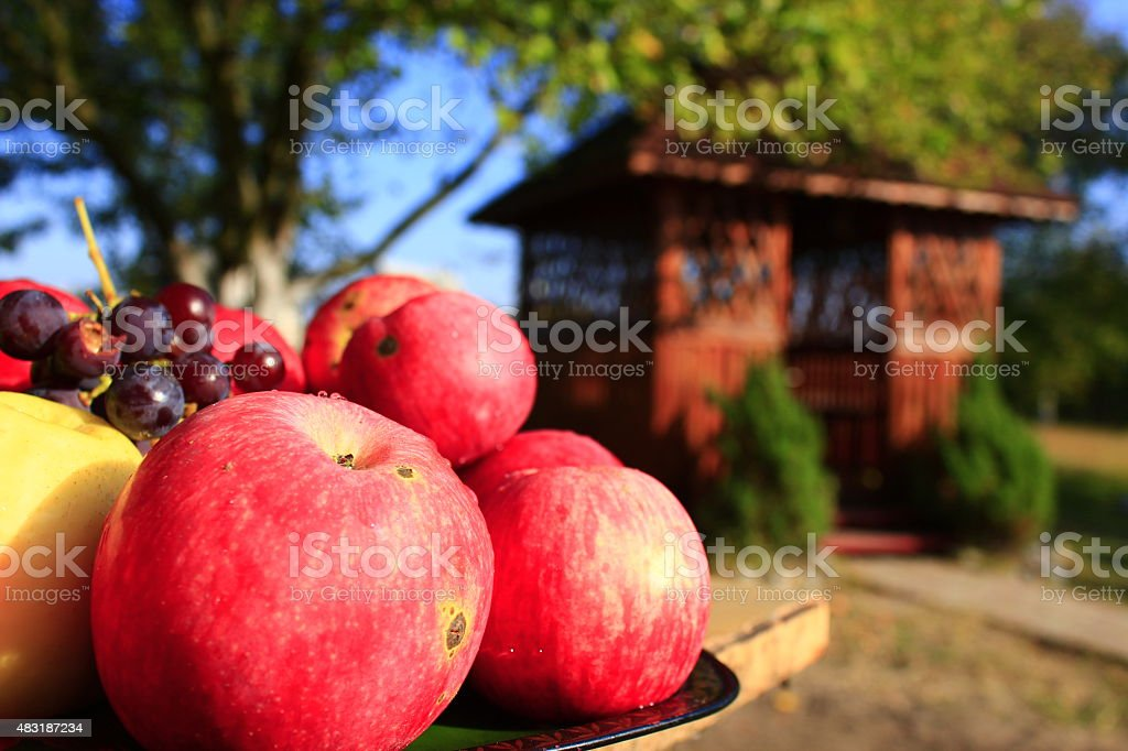 red apples on the arbor background stock photo