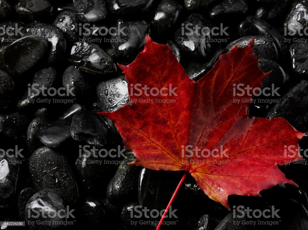 Red Autumn Leaf on Black Pebbles royalty-free stock photo