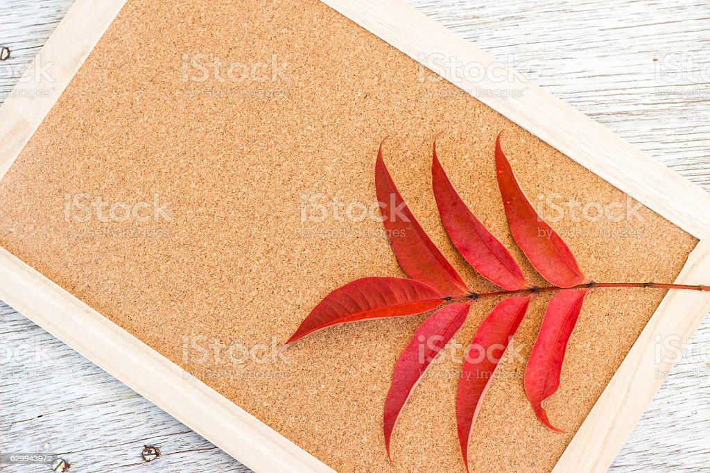 Red autumn leaves on cork board stock photo