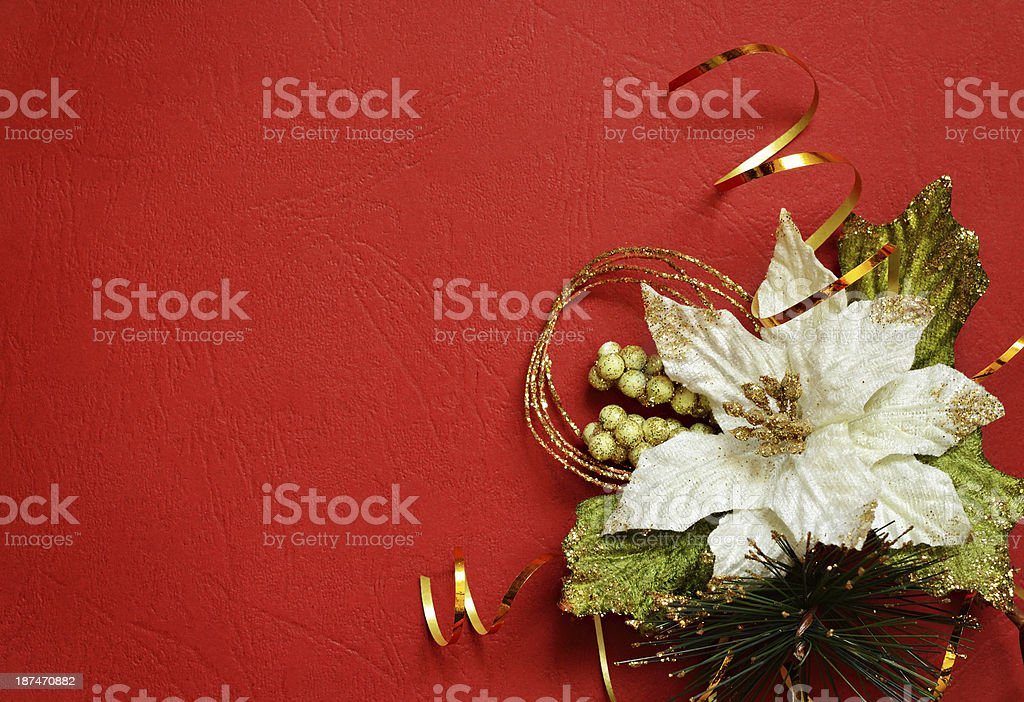 Red background with white pionsettia in a corner royalty-free stock photo