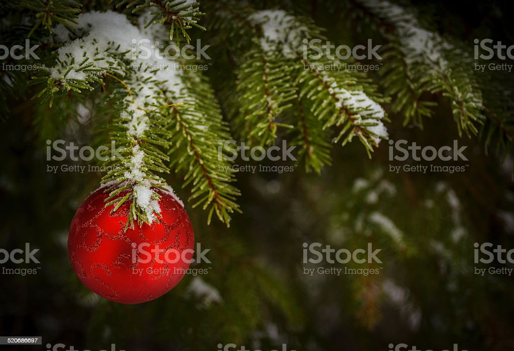 red ball on christmas tree stock photo
