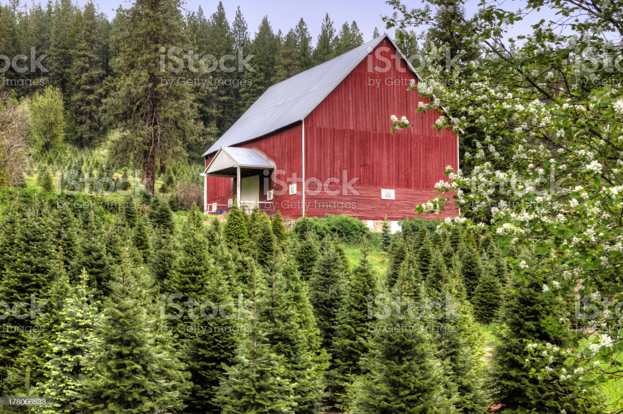 Red barn and green trees. royalty-free stock photo