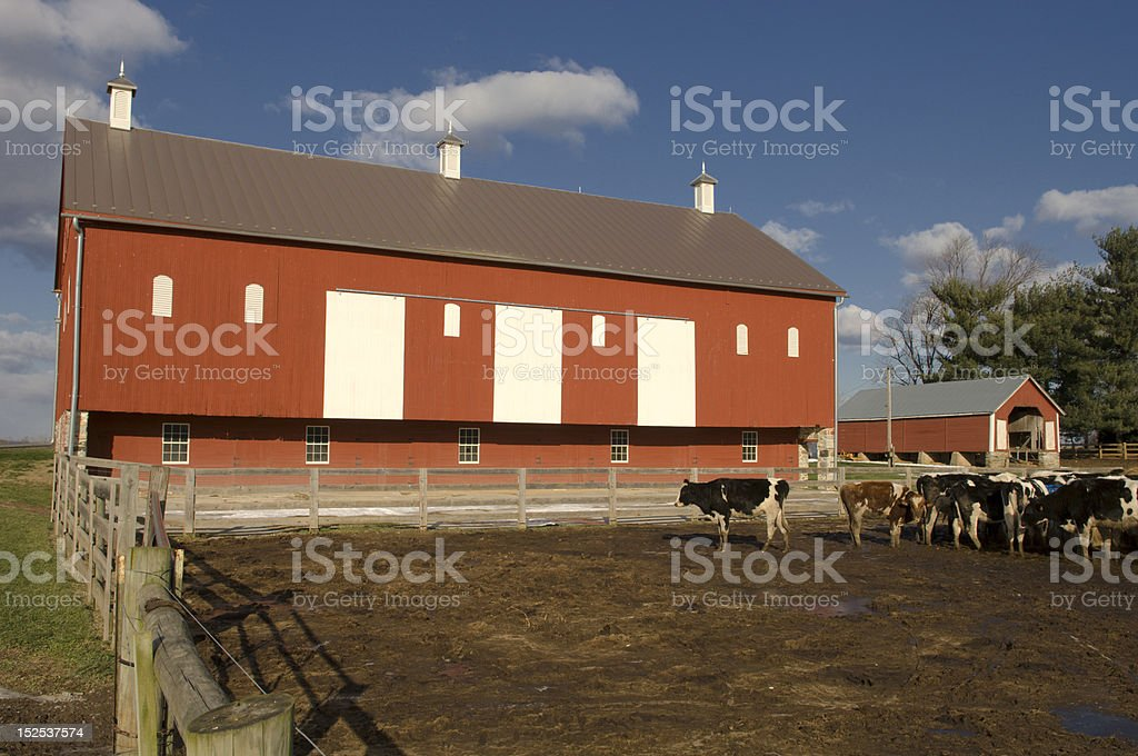 Red Barn and Livestock royalty-free stock photo