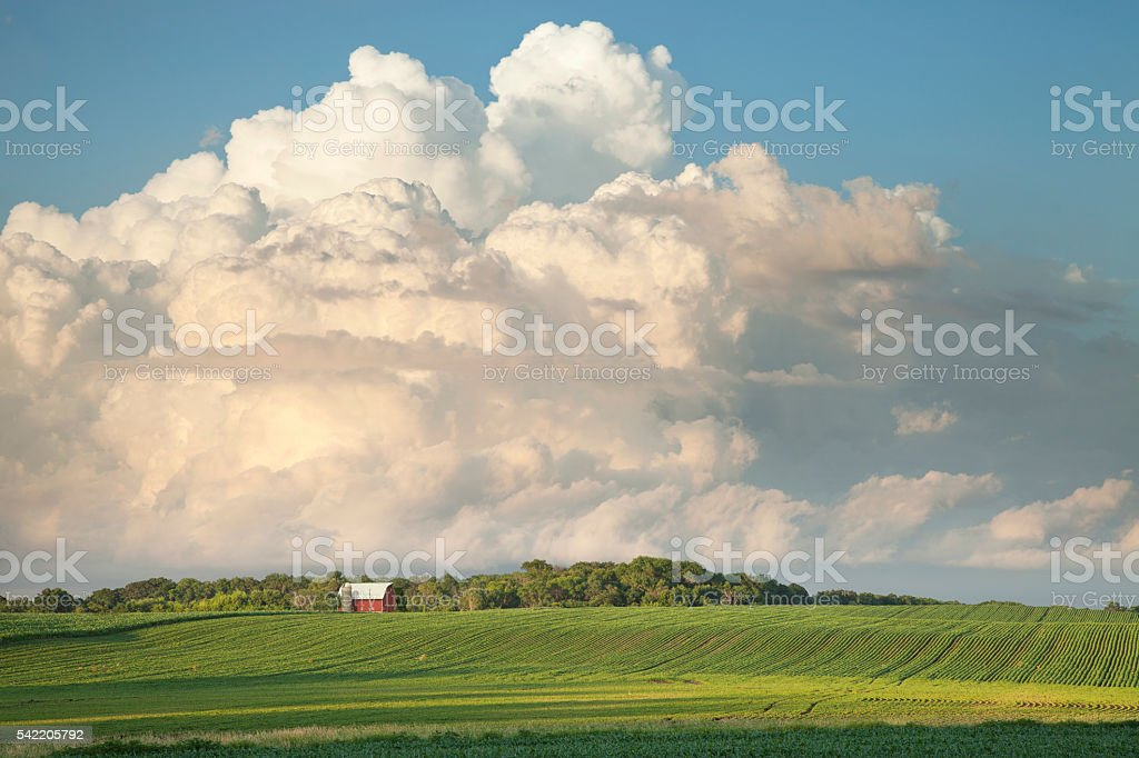 Red Barn and Soybean Fields Below Dramatic Cloudscape stock photo