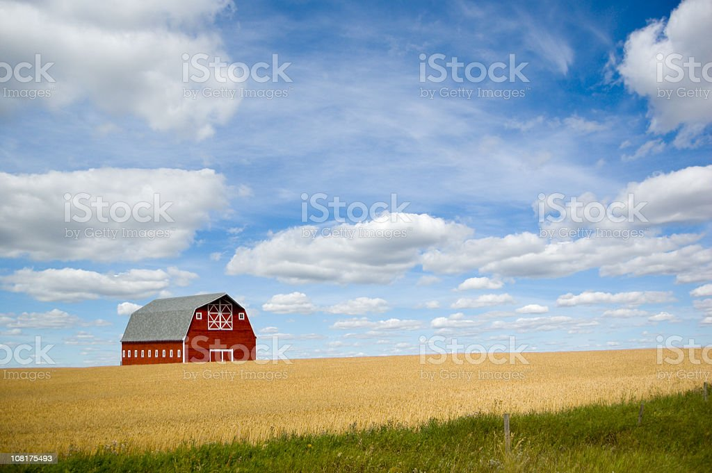 Red Barn, Grain Crop, and Summer Sky royalty-free stock photo