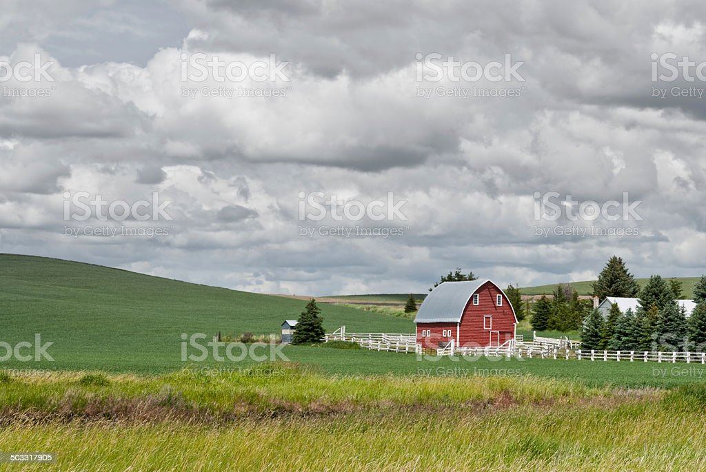 Red Barn in a Wheat Field stock photo