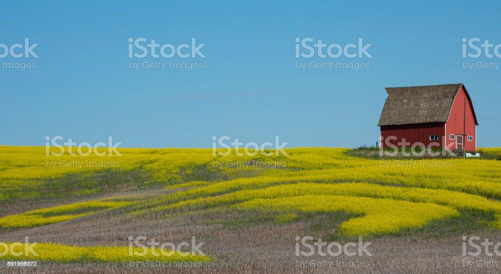 Red Barn on Mustard Field stock photo