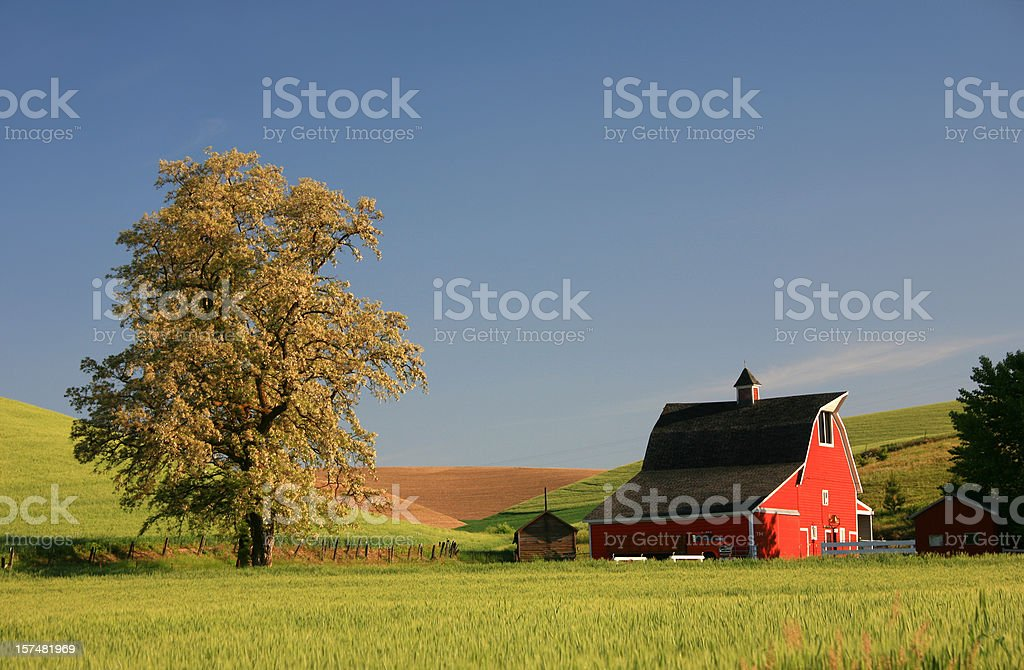 Red Barn on the Rolling Prairie royalty-free stock photo