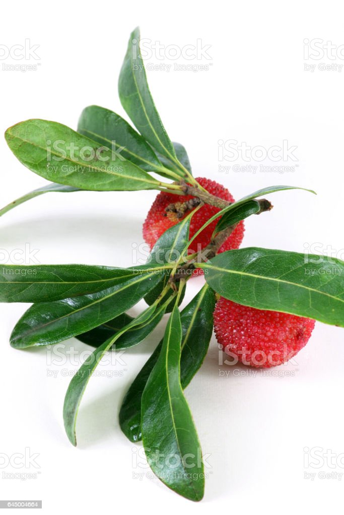 Red bayberry ,Arbutus  isolated on white background stock photo