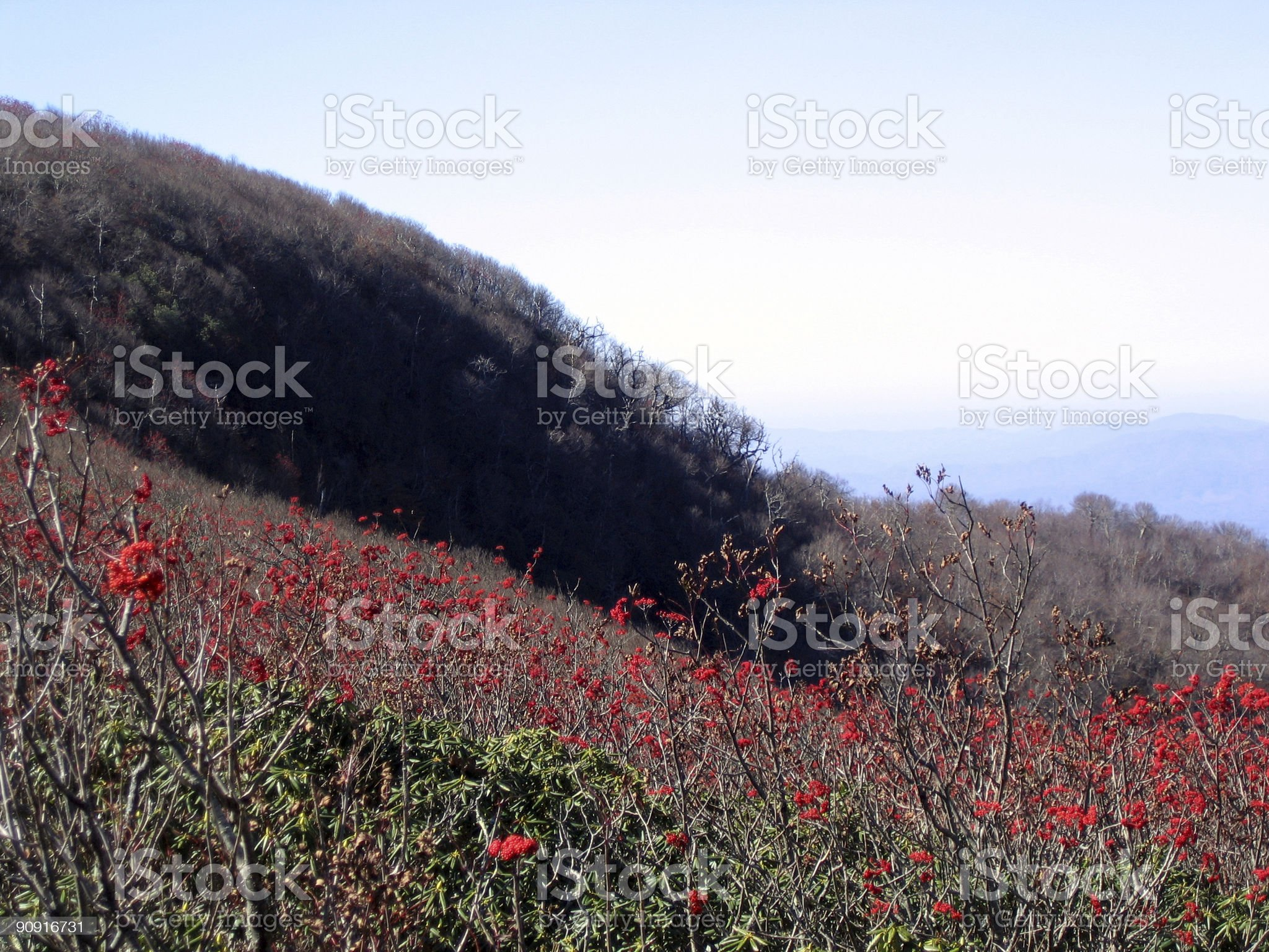 red berries against mountains royalty-free stock photo