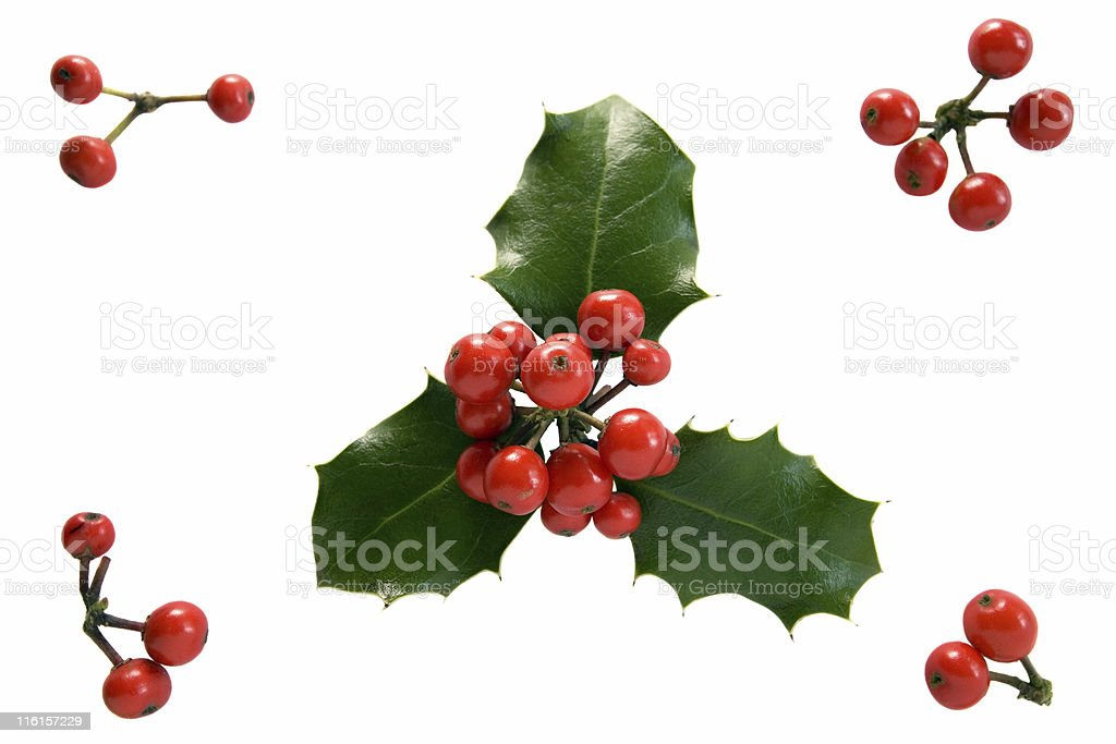 Red Berries and Holly royalty-free stock photo