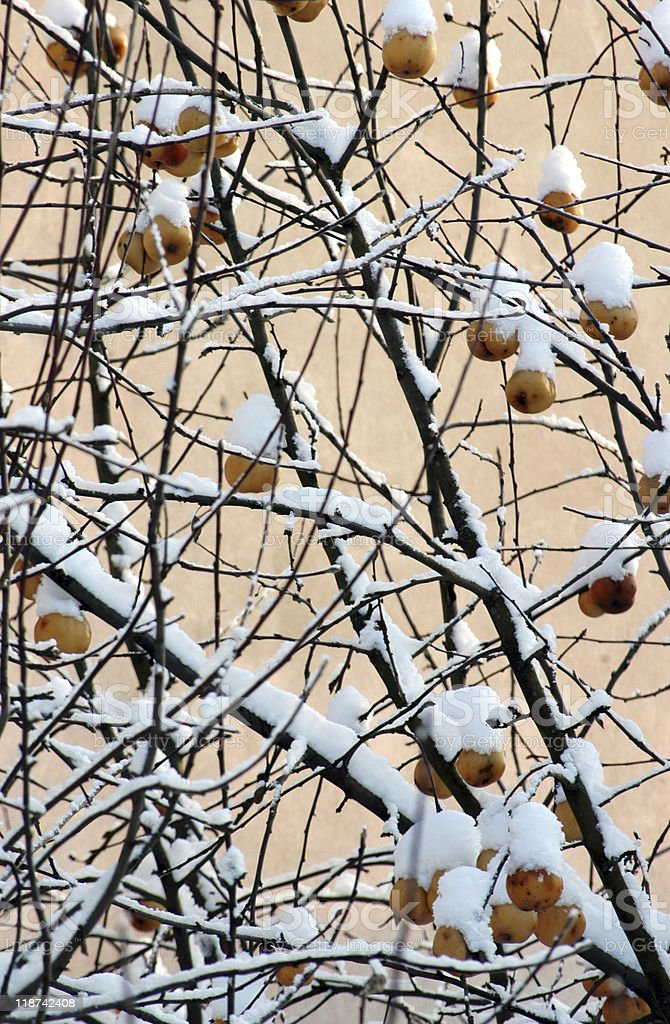 red berries covered with snow at winter royalty-free stock photo