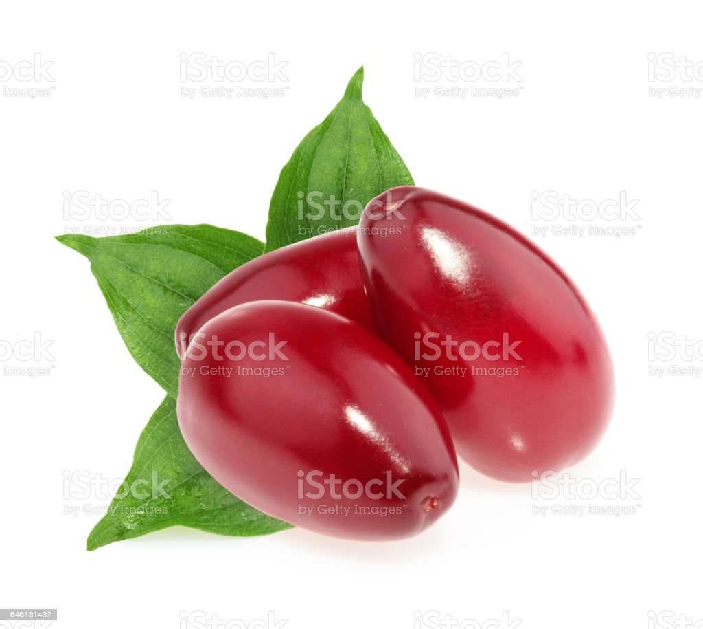Red berries of cornel or dogwood isolated stock photo