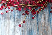 Red Berries on blue wooden background / Christmas background