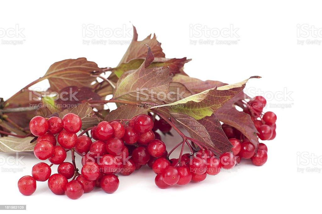 Des fruits rouges photo libre de droits