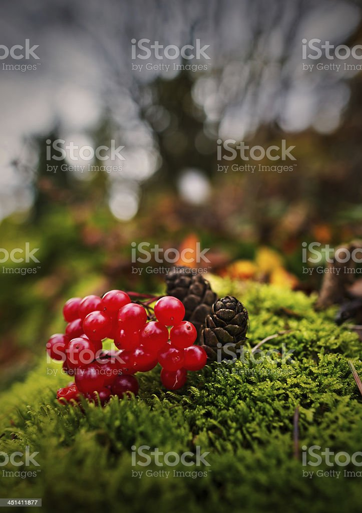 Rote Beeren stock photo