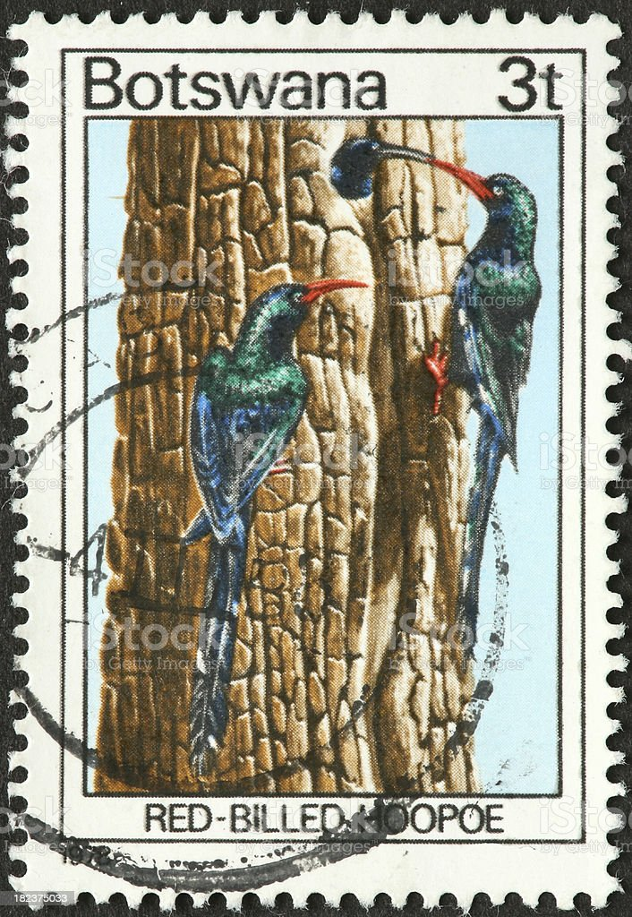red billed hoopoe on a Botswana stamp stock photo