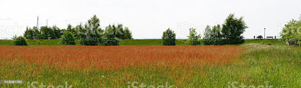 red blooming meadow behind a dike stock photo