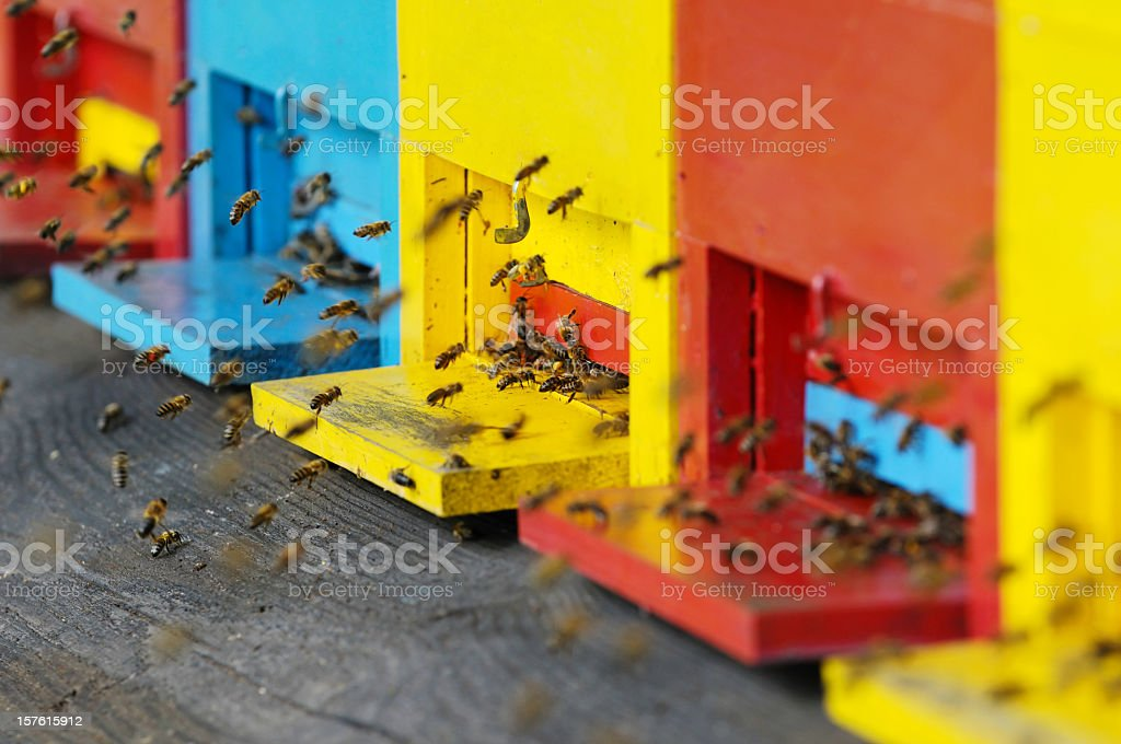 Red, blue and yellow beehives with swarming bees stock photo